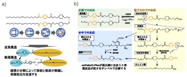 図3 a)本研究で開発したssPalmO-Pheの構造と分解反応(HyPER)の概略。b)ssPalmO-Pheの自己分解反応の反応機構。