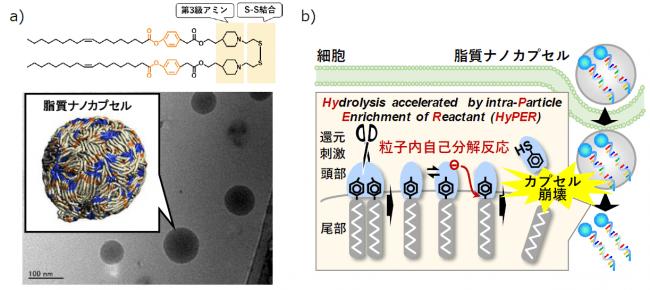図1 a)本研究で開発した素材(ssPalmO-Phe)の化学式(上)、電子顕微鏡像及び分子シミュレーションにより計算された粒子モデル(下)。b)本素材からなる脂質ナノカプセルは、細胞内の環境においてのみ自己分解して内封分子を放出する。