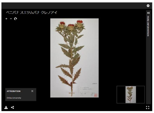 写真1:ベニバナなど、旧薬学部附属薬用植物園で栽培し教育・研究に活用していた植物も見ることができる