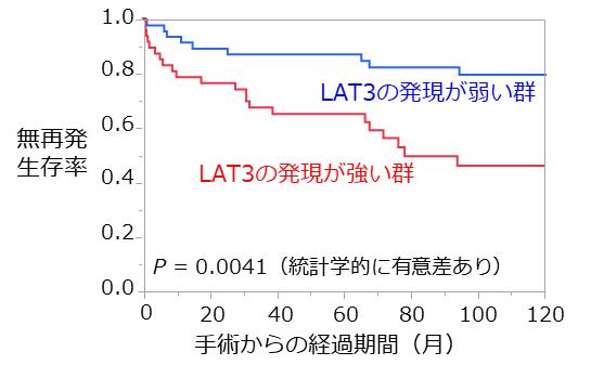 図3 LAT3の染色の強さと術後再発との関係。 LAT3の発現が強い群は無再発生存率が低く、再発せずに生きている割合が低い。