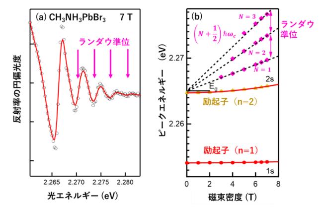 図3 (a)CH3NH3PbBr3の反射率の円偏光度スペクトル。振動構造はランダウ準位 (b) ランダウ準位と励起子エネルギーの磁場依存性。ランダウ準位の傾きから電子の換算質量を見積もることができる。