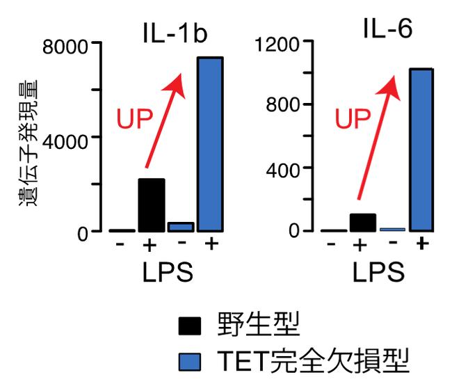 図1.TET完全欠損による炎症性サイトカイン遺伝子の高発現