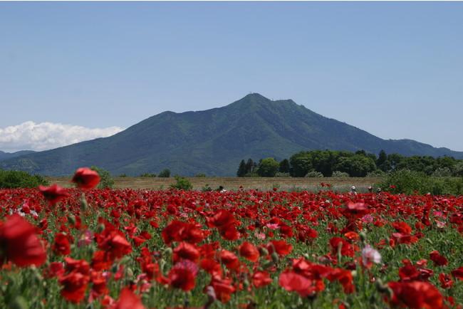 茨城県下妻市 小貝川ふれあい公園 下妻市では移住者を募集しています