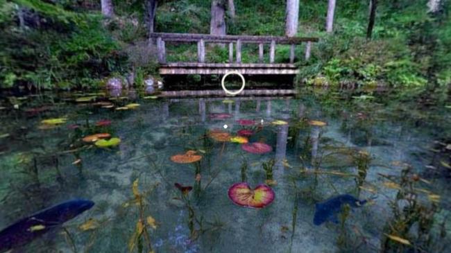 モネの絵画『睡蓮』のような、関市の名もなき池 (通称「モネの池」)