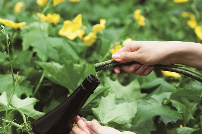 伝統素材のヘチマは自社農場で栽培