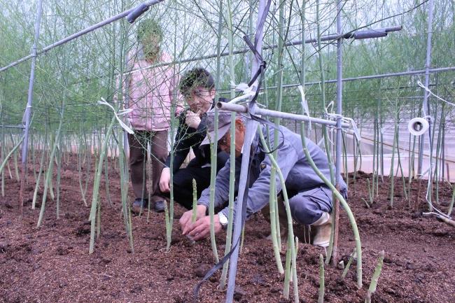 実際にアスパラガスを収穫する 生産者の藤田充さんと料理長の岸本達哉
