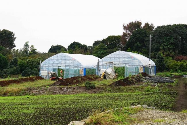 実証実験を行うハウス農園「BASE」