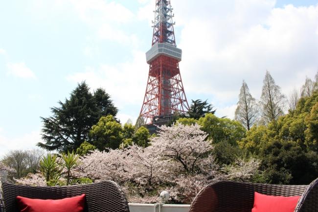 テラス席から望む桜と東京タワー