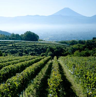 サントリー登美の丘ワイナリー ぶどう畑イメージ