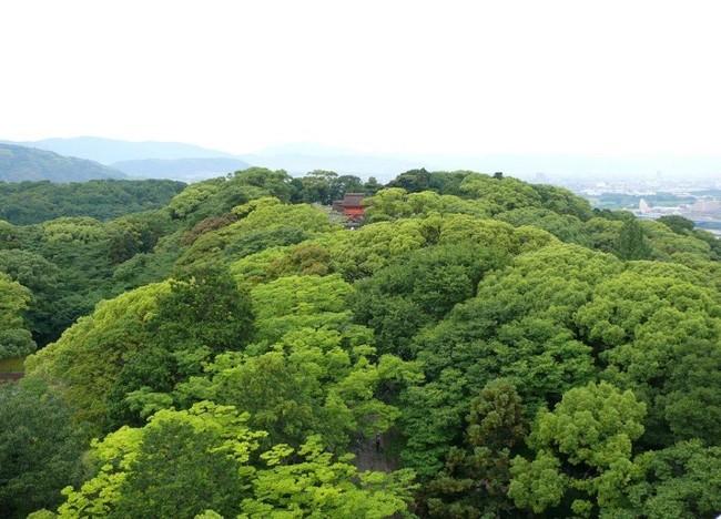 壮大な自然に囲まれた石清水八幡宮