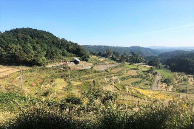 耕作放棄地が目立つ復元前の上籾棚田