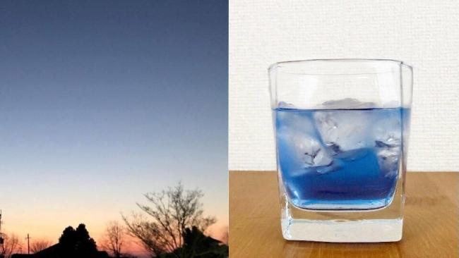 バタフライピーの漬け込み方で、青色の濃淡も変化します。