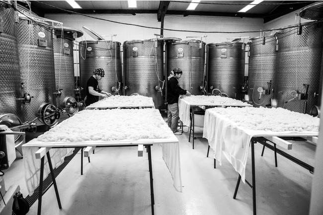 「KURA GRAND PARIS」醸造の様子