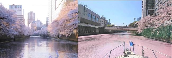 東京の人気お花見しポット目黒川を船からお楽しみください