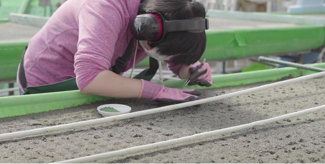 高床式砂栽培
