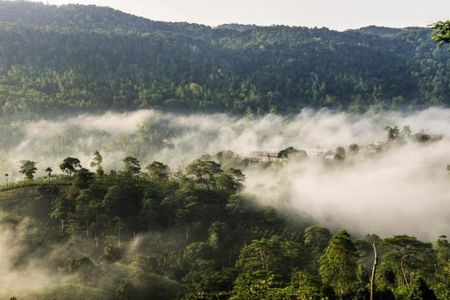 スリランカ「ルンビニ茶園」。世界遺産の森林に囲まれた環境は茶葉にとって最高のもの。2017年世界最多受賞茶園。