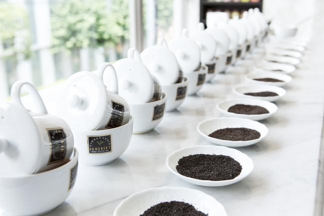 おいしい紅茶を届けるための、  ティーテイスティングの一コマ