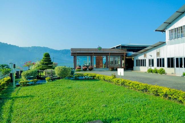 スリランカ ルンビニ茶園