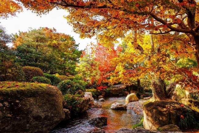 公園の紅葉, 福岡