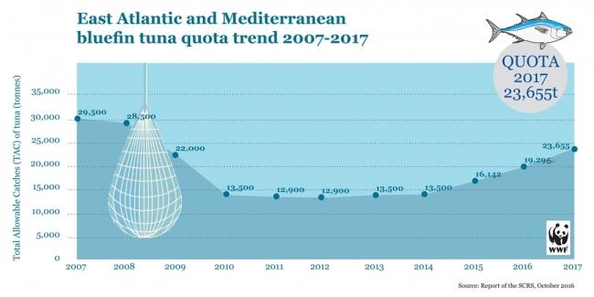 ICCAT科学委員会による、東部大西洋および地中海のクロマグロ総漁獲枠の推移