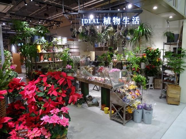 緑のある生活を提案するIDEAL 植物生活