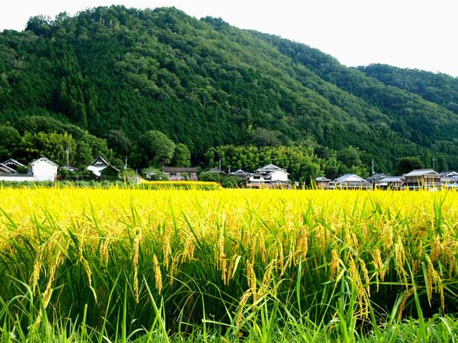 重要伝統建造物群でもある福住宿場町。日本の原風景ともいえる豊かな田園が広っています。