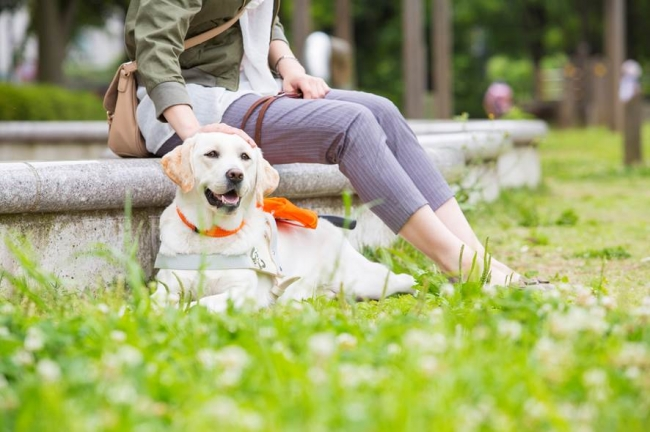 プレスリリース 盲導犬