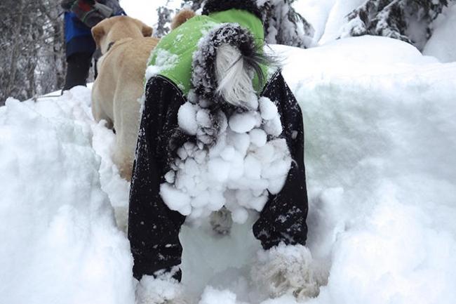 犬の靴 雪
