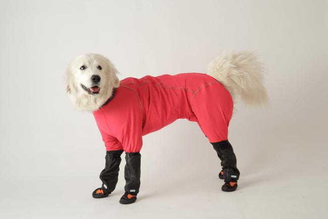 docdog(ドックドッグ)レッグガード