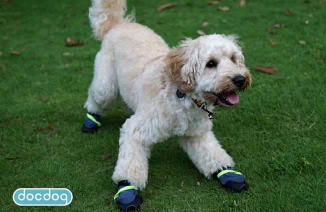 犬の靴(ドッグブーツ)