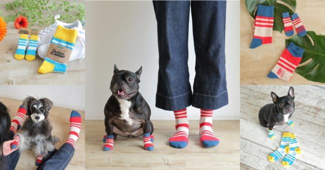 犬の肉球を守る。犬の靴はdocdog(ドックドッグ)