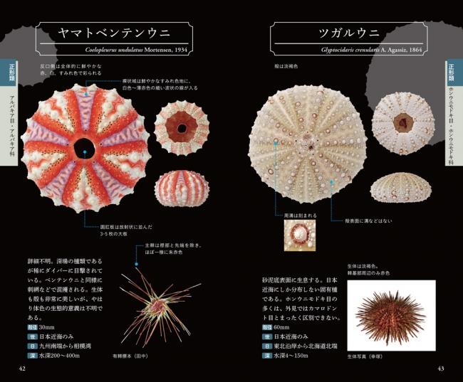 ウニ 種類 図鑑