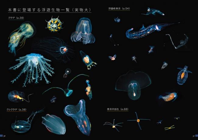 浮遊生物一覧