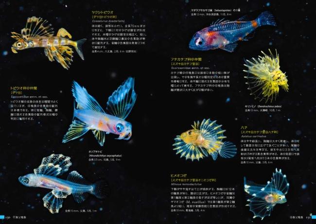 仔魚と稚魚