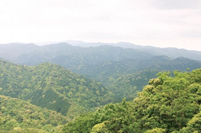 神宮森や混交林などの貴重な自然
