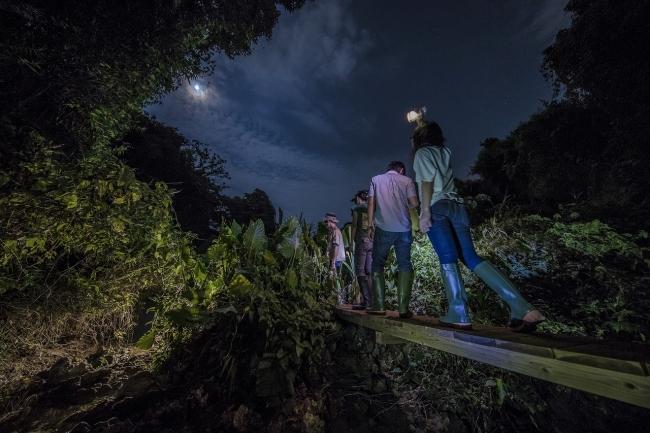 夜のジャングル探検「ウワーガージャングル」