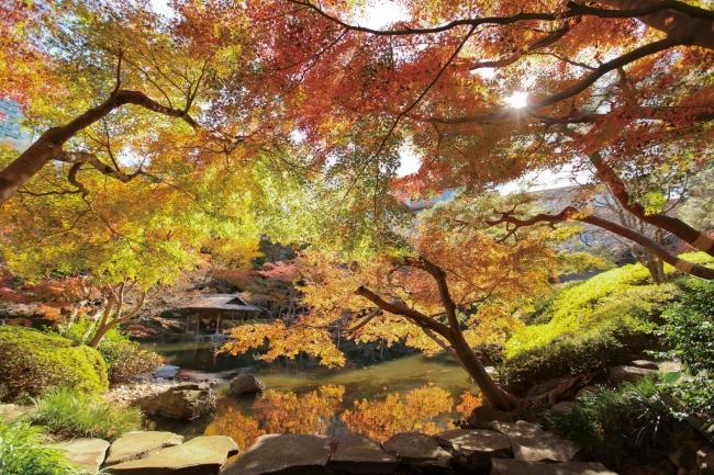 八芳園の紅葉の⾒ごろは2016年11月30日~12月4日予定