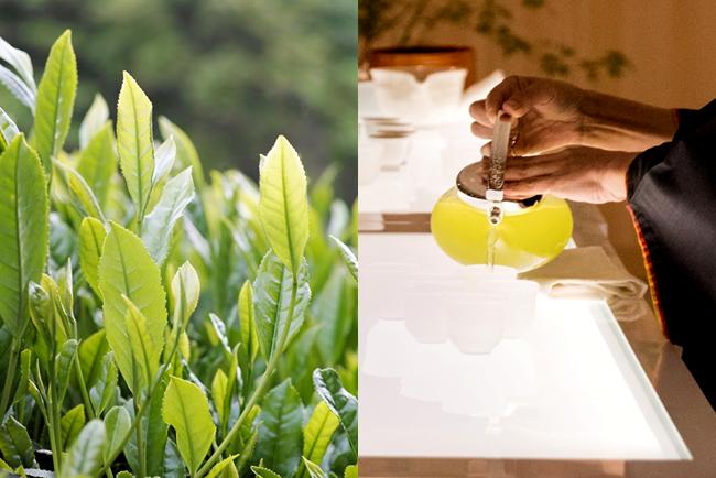 京都福寿園のお茶