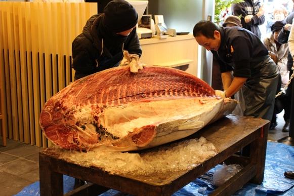 2016年初セリでは215kgの大間マグロを仕入れました!