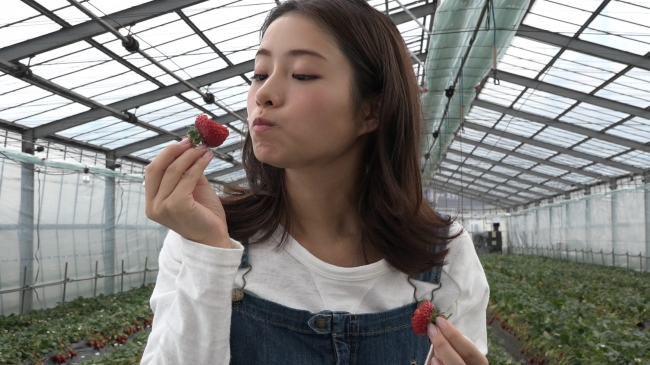 チャレンジ動画(石井農園 Erdbeere )