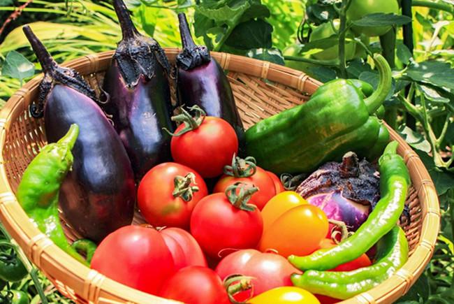 ビタミン豊富な新鮮野菜