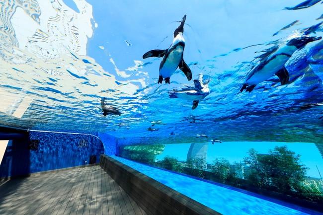 「天空のペンギン」