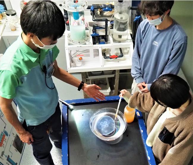 クラゲ飼育スタッフのお仕事のぞき見体験
