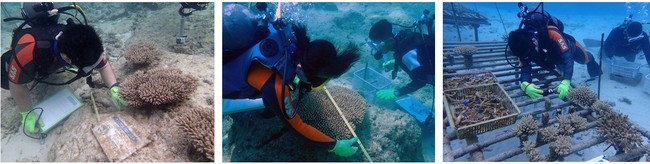恩納村の海での定期メンテナンス(清掃や成長記録)