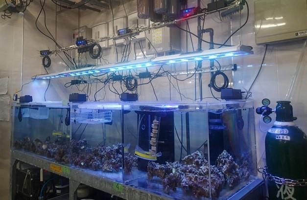 サンシャイン水族館バックヤード にあるサンゴ幼生育成水槽