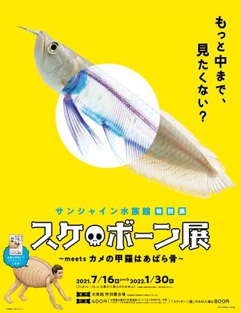 (C)川崎悟司 SBクリエイティブ 新世界『透明標本』冨田伊織