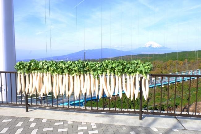 三島の冬の風物詩「富士山と大根干し」を期間 限定(12月中旬頃まで)で実施