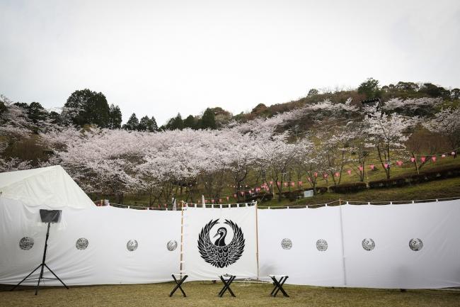 美濃金山城跡のある蘭丸ふる里の森にて桜舞い散る中、IKUSA