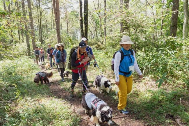 湧水を目指して登山道を愛犬と登るトレッキング