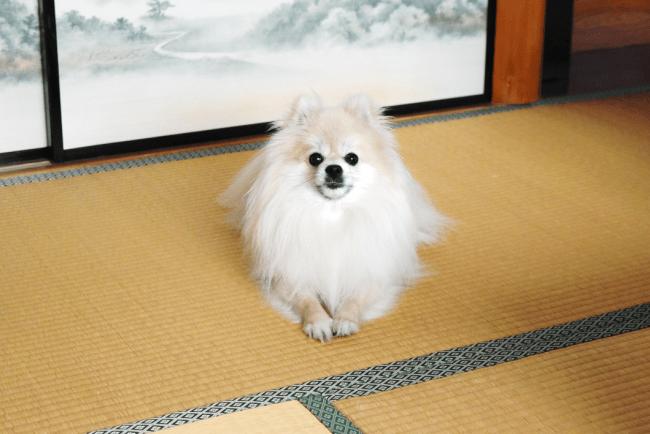 優鶴の宣伝部長を務める看板犬「リンク」